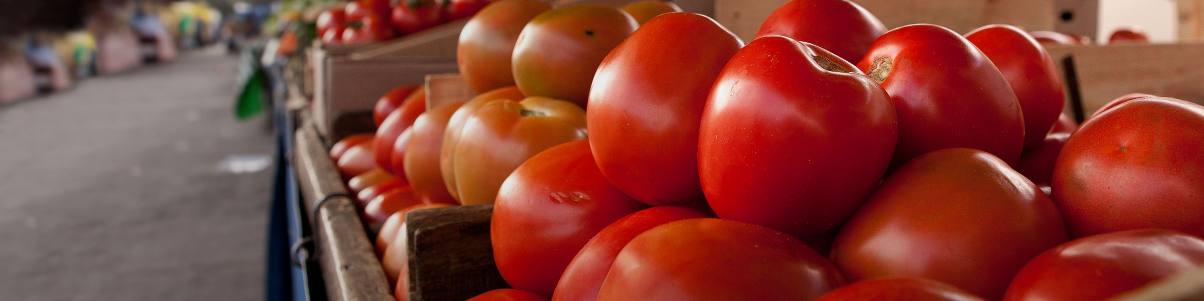 close-up of red tomatoes
